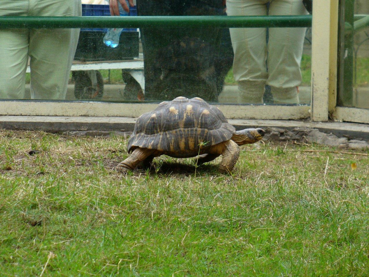 Команда Помощи Черепахам - начало (ч.2)