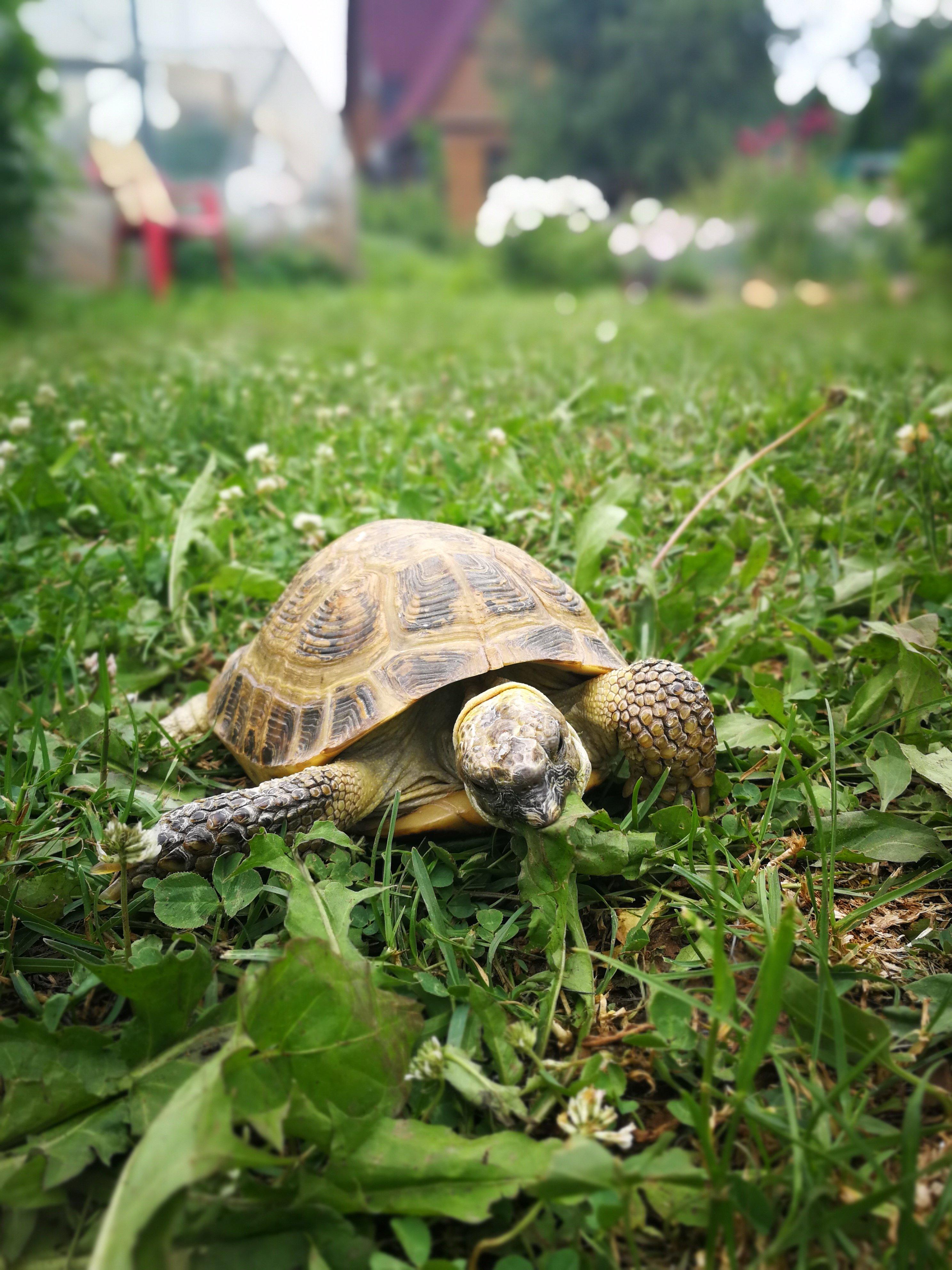 10 советов себе перед заведением черепахи