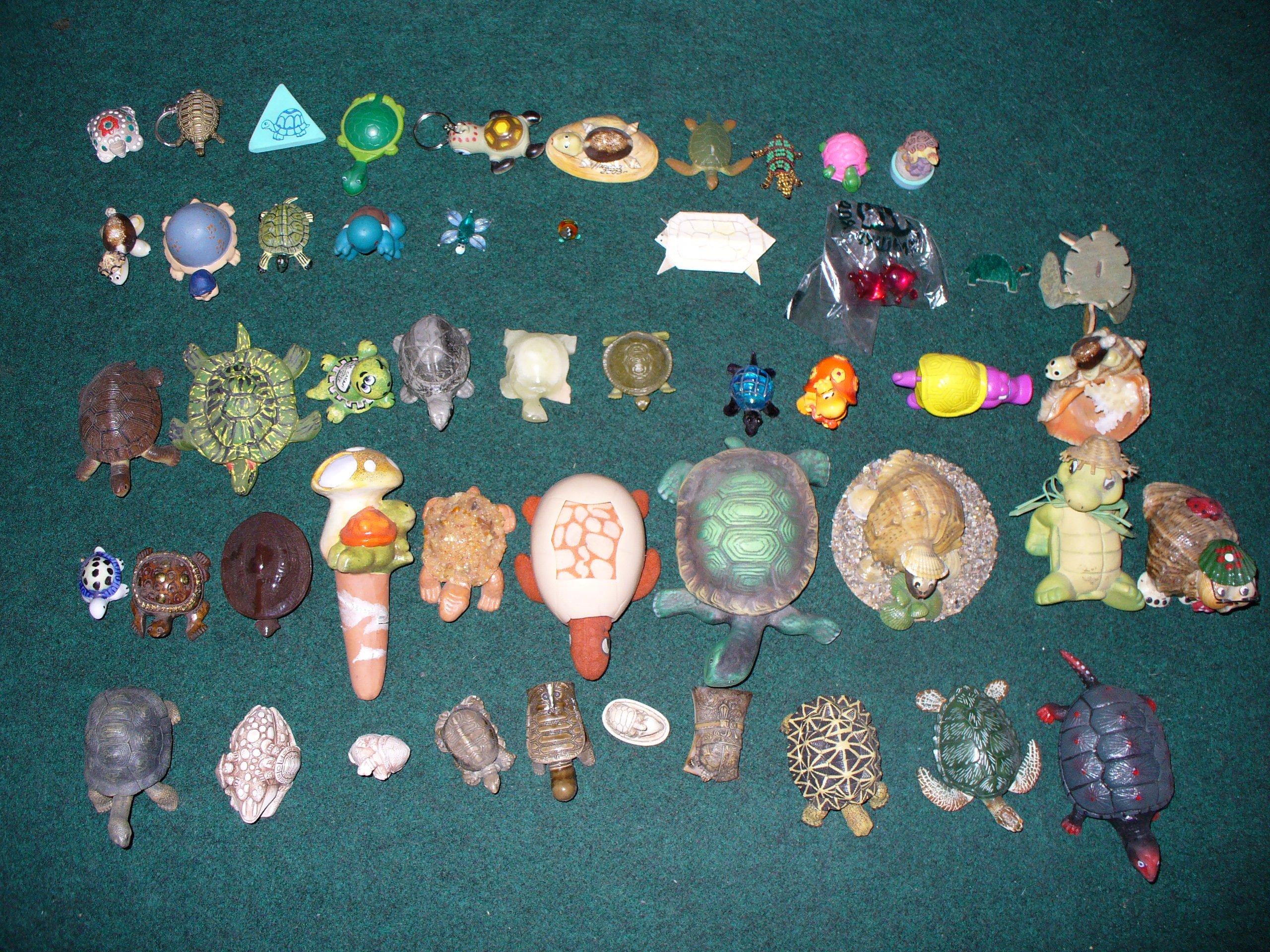 Коллекция черепах