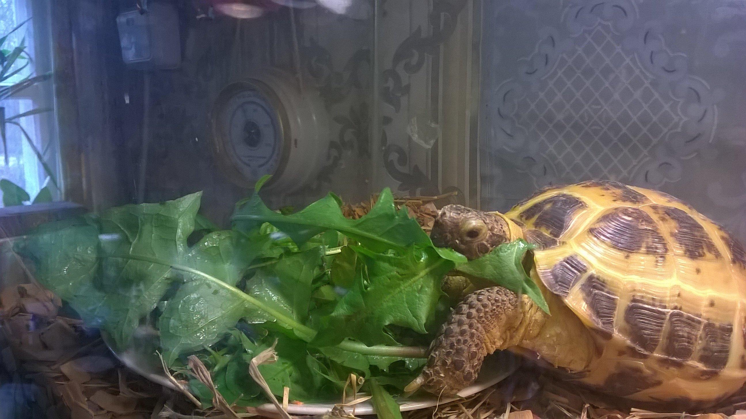 Начало,  черепаха по имени Черепаха.