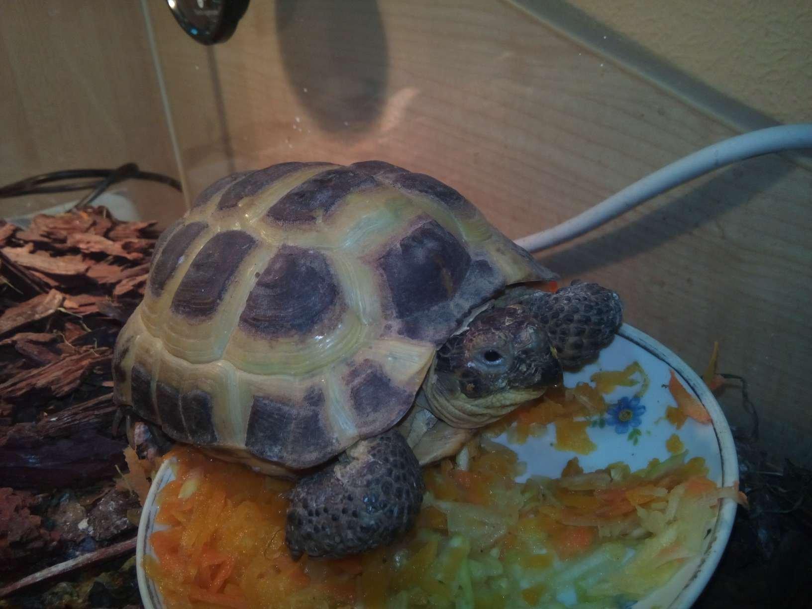 Игры, в которые играют черепахи