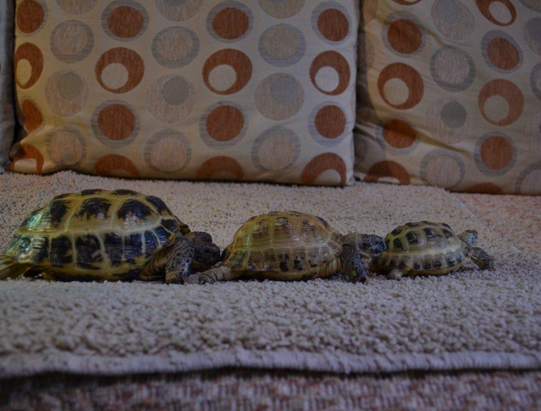 Террариумная стойка для четверых черепах