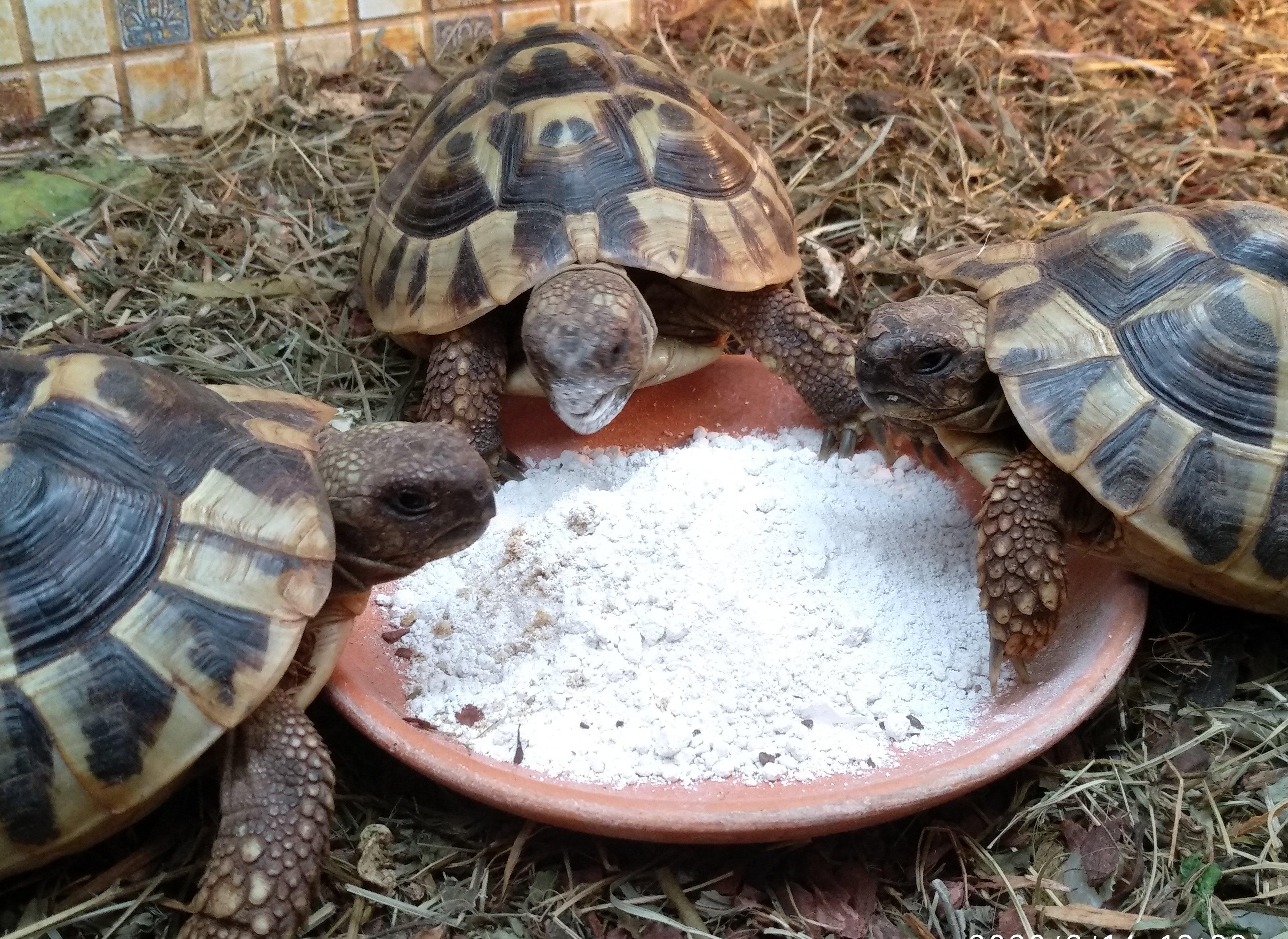 Кальций для моих черепах
